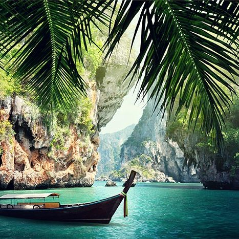 Palme-foto-thailandia